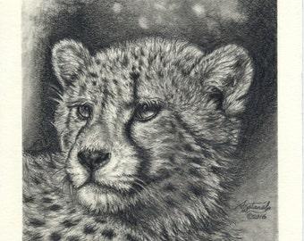 """Original Graphite Drawing of a Cheetah Big Cat 5"""" x 5"""""""