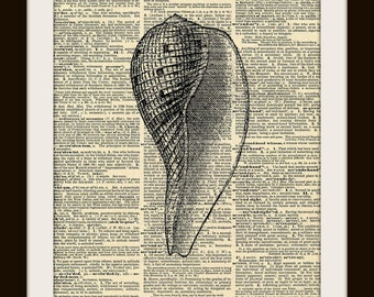 Vintage Science Fauna SEASHELL Art Print on Vintage Dictionary Page 8x10