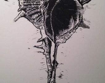 Murex brandaris woodcut print