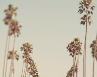palm trees photo, California art, tropical, Los Angeles home decor, LA print, blue, green, nursery wall art, LA photography, Myan Soffia