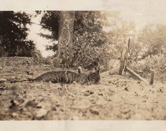 Original Vintage photograph Cat Laying Around Outdoors 1934