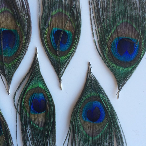 NATURAL PEACOCK EYE Feathers 6 pieces ,  Small Eyes  /  933