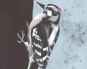 "Downy Woodpecker - bird art print, 6"" x 6""."