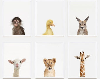 Baby Animal Nursery Art Print: Baby Monkey Little Darling.