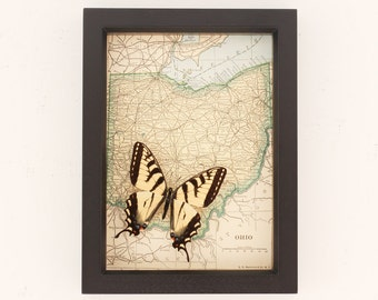 Vintage Map of OHIO with Tiger Swallowtail