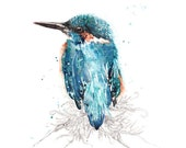 Azure Kingfisher **Limited Edition** Art Print in A3, A2 & A1 Watercolour Giclee Print