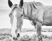 Horse Portrait Photograph - 10x10 Black and White Horse Photography Print