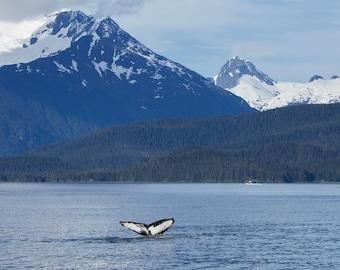 Humpback Whale Fluke in Alaska - 11x14 Alaskan Wildlife Photo Print