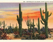 Vintage Southwest Postcard - Saguaro Cactus on the Desert at Sunset (Unused)
