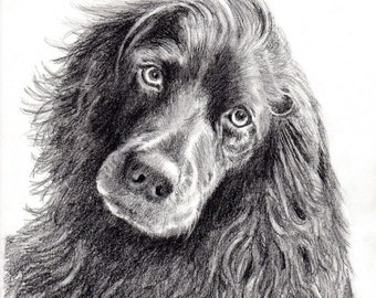Custom Dog Pet Portrait Pencil 8x10