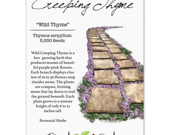 Wild Creeping Thyme Seeds (Thymus serpyllum) Open Pollinated Seeds by Seed Needs
