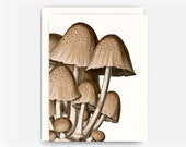 Vintage Botanical French Mushroom Greeting Card with Recipe, Sauteed Mushrooms with Italian Herbs  Recipe Card, Blank Card, Note Card A2