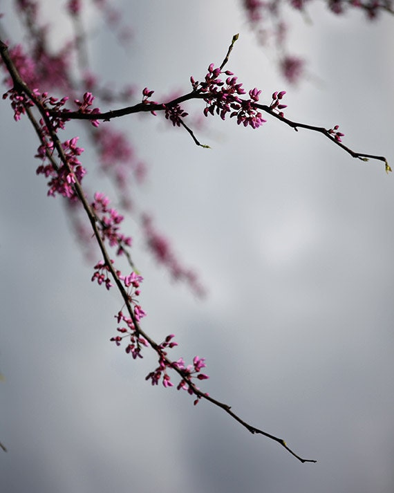 Spring Nature Photography,  Affordable Fine Art Print. Pretty Pink Buds, Gray Sky, Wall Art Home Decor