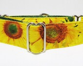 "1.5 Inch Sunflower Martingale Bright Yellow Big Sunflowers 3/4"" 1"" Martingale, 2""Martingale whippet greyhound collar girl dog Iggy's Designs"