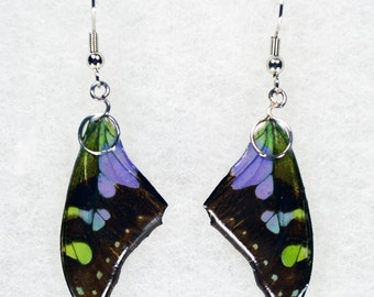 Real Butterfly Earrings - Purple Spotted Swallowtail - Hand Cast Resin