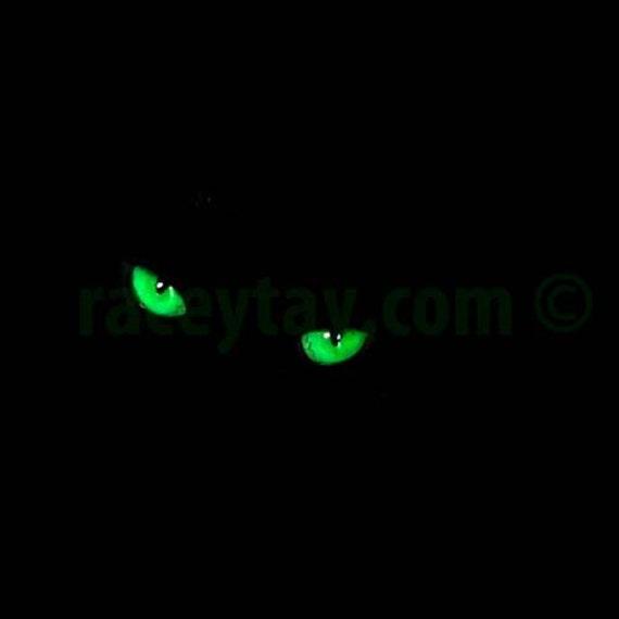 Spooky Cat Eyes, Black Cat Print, Green, Black, Cat Photograph, Halloween Decor