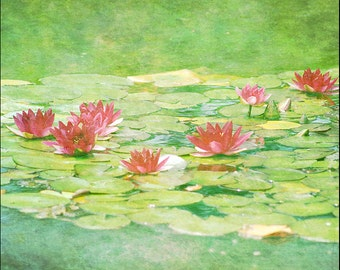 Water Lily, flower photo, floral art, nature photography, pink flowers, texture art