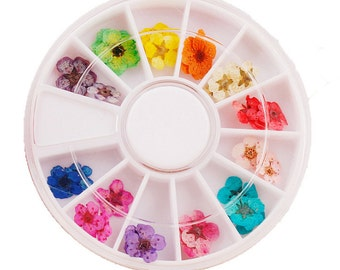 High Quality Real Dried Flower use for making Resin Accessories 12 Colors Set (Random Color)