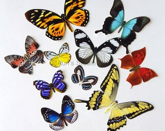 Realistic Paper Butterflies - Cut outs - Set of 10 paper butterfly cut outs - set 2