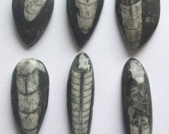 Fossil Orthoceras pendants,cabochons