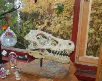 Tyrannosaurus rex Skull Sculpture small hand built by NW artist Michael Gonzales