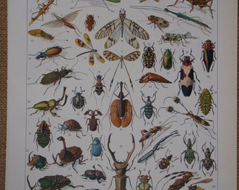 Large Color Vintage Lithograph Book Print ''INSECTES'' (Insects) 1931 by Vignerot Demoulin from the Nouveau Larousse Illustré