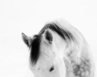 Modern White Horse Photograph | White on White Horse Art Print