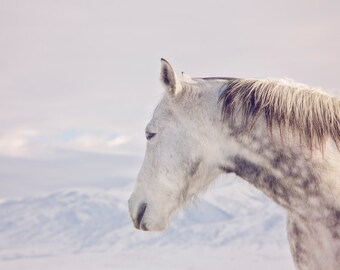 White Horse Photograph in Winter Mountains | Horse Wall Art