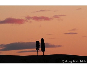 """Fine Art Color Landscape Photography of Tuscany - """"Pair of Cypress Trees and Morning Sky"""""""