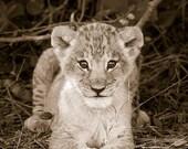 Safari Nursery Decor, LIO...
