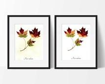 Red Maple Fall Leaves Botanic Print - Autumn Leaves Botanical Print