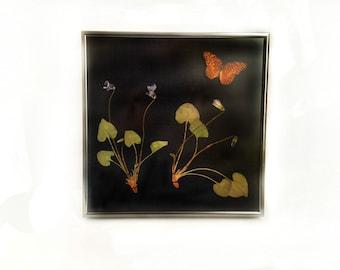 Pressed Violet and Preserved Variegated Fritillary Natural History Home Decor - Framed Botanicals - 10x10 Framed Nature Art
