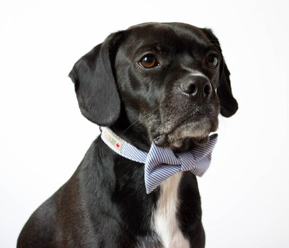 Blue Seersucker Bowtie Dog Collar