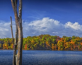 Dead Tree Trunk during Autumn by Hall Lake in the Yankee Springs Recreation Area in Southwest Michigan No.1818 Fine Art Landscape Photograph