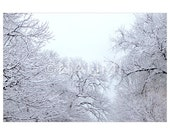 """Tapestry of white trees. 8 x 12"""" Fine Art Photography Archival Pigment Print - winter magical nature image of happiness, clarity and peace"""