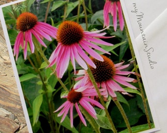 Purple Coneflowers Photo Note Card. Nature Photography. Echinacea. Pink Flowers. Montana.