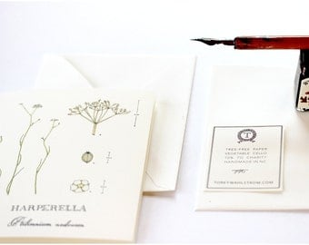 Botanical Note Cards, Rare Wildflower Species Collection, Harparella