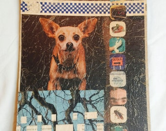 Collage - Chihuahua (70)