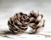 Rustic Home Decor, Brown Pinecones, Grey White Neutral Decor for IKEA RIBBA Frames, Winter Home Decor, Nature Photography.