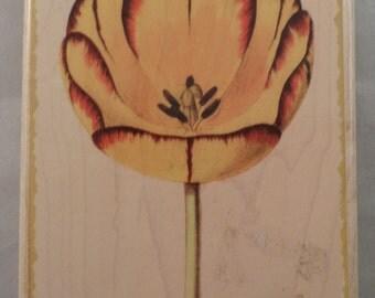 Dr Horner Tulip Flower Garden Bloom Wooden Rubber Stamp
