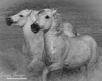 Two Camargue Horses Splash - Fine Art Horse Photograph - Horse - Fine Art Print - Camargue - Ocean