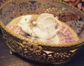 The Perfume Thief Taxidermied Mouse Mount in Antique 1920s Glass Box