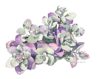Succulent Print of watercolour painting - S0516 - A3 size largest print - Botanical art - Succulent watercolor painting - print
