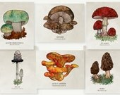 Organic Cotton Patches - Mushrooms - 6 Designs to Choose From!