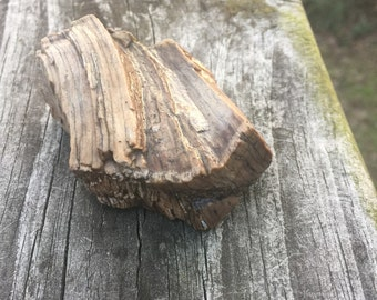 Petrified wood - rough chunk