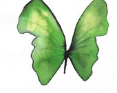 """green butterfly 8 X 10"""" original watercolour painting"""