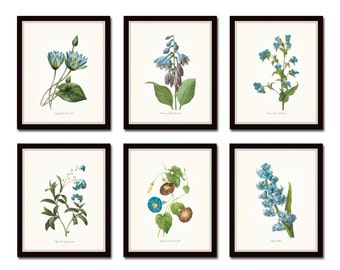 Blue Botanical Print Set No. 2, Redoute Botanicals, Giclee, Art, Flower Prints, Posters, Antique Botanicals, Prints Sets, Illustration