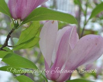 Fine Art Photography - Magnolias