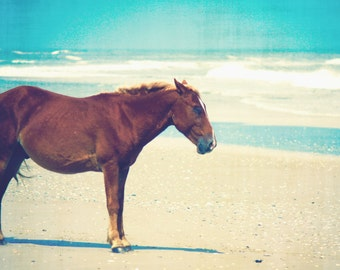 Coastal Horse Photography | Outer Banks Art Print | Wild Horse on Outer Banks Beach | North Carolina Coastal Wall | Blue Ocean Waves Print