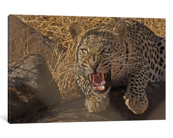 iCanvas In No Uncertain Terms Gallery Wrapped Canvas Art Print by Ashley Vincent